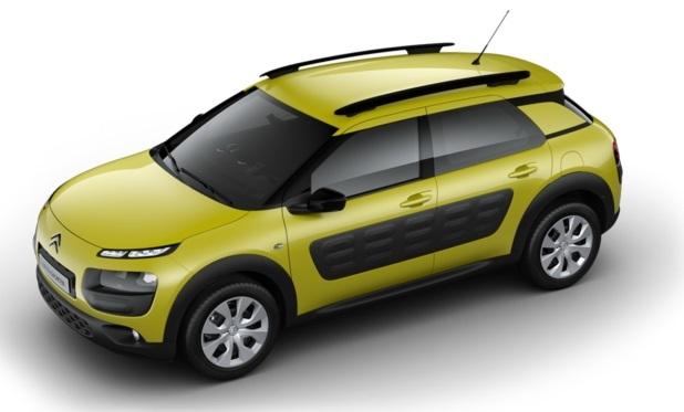 C4 Cactus Hello Yellow 001